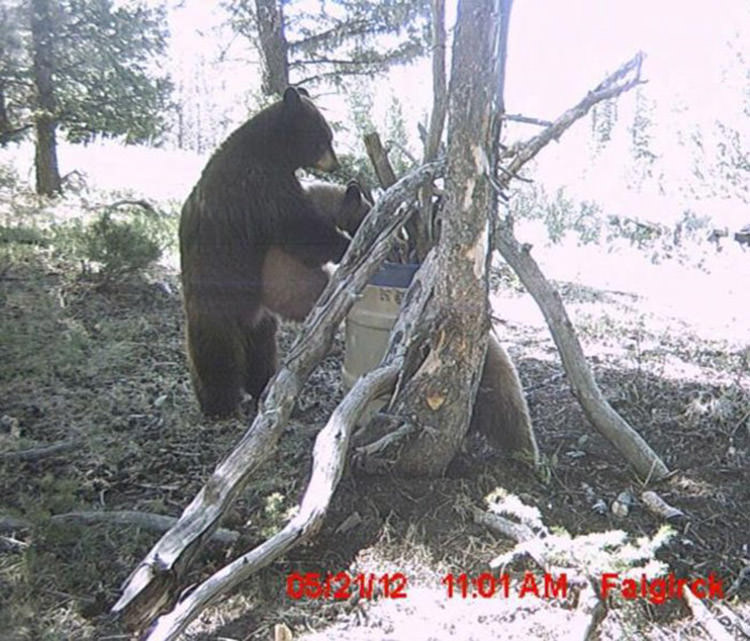 funny-animals-caught-hidden-cameras