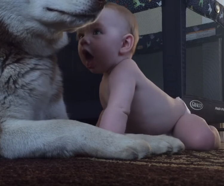 baby-husky-dog-best-friends