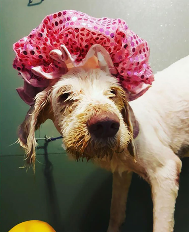 stray-dog-matted-fur-rescued