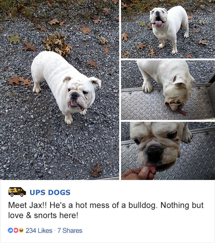 ups-drivers-fb-group-dogs