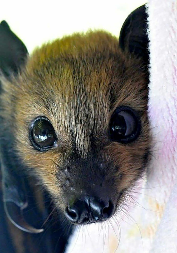 18 Pictures That Prove Bats Are Actually Adorable Top13
