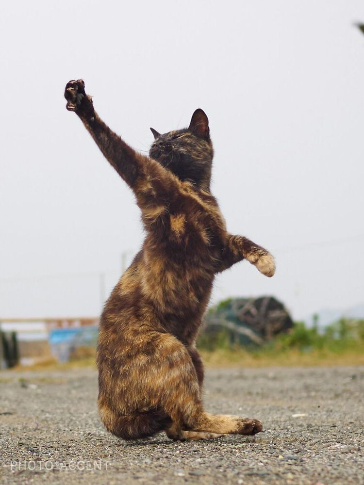 Japanese Photographer Captures Cats Best Kung-Fu Moves (15 ...