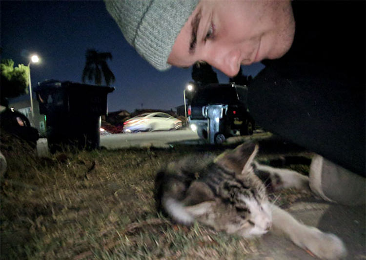 guy-pets-stray-cat