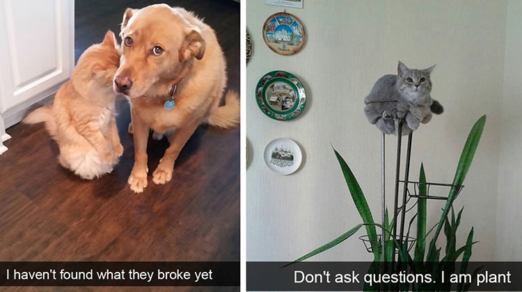 Cats And Dogs Pics Funny