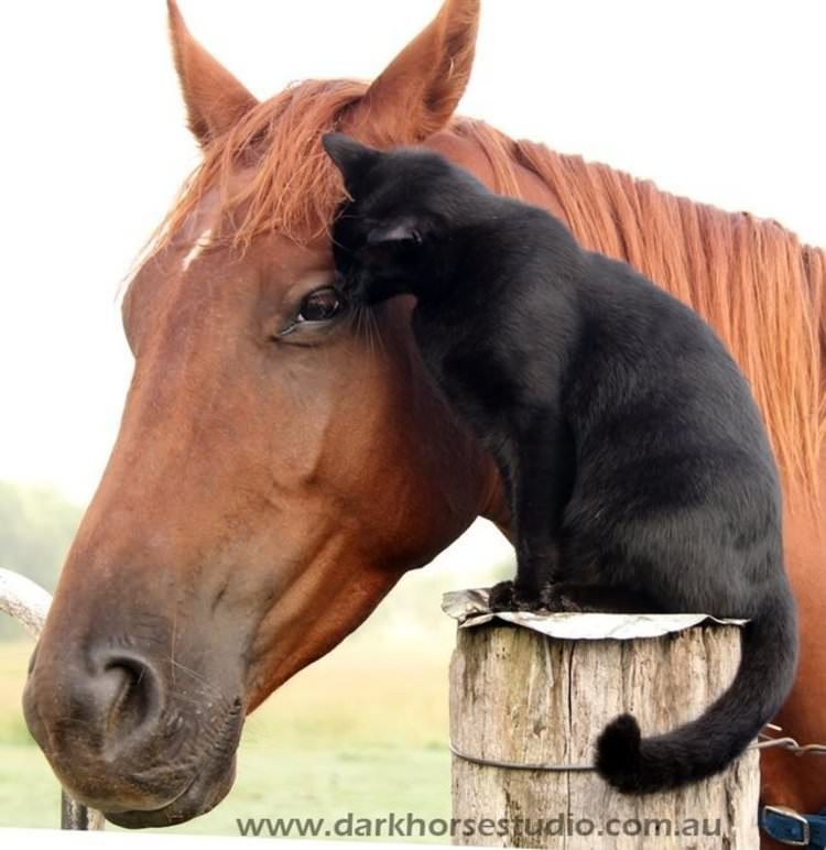 shy-cat-and-horse-are-best-friends