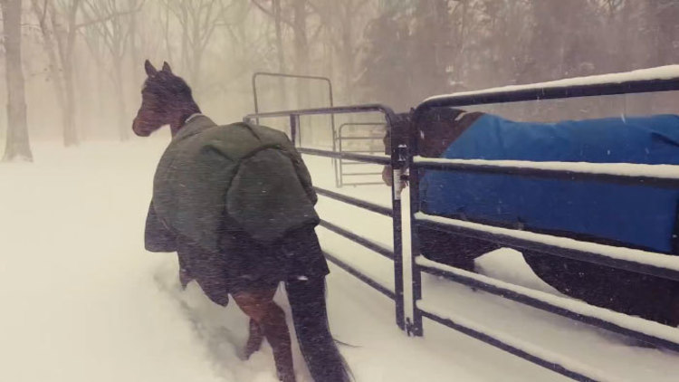 horses regret going out in the snow