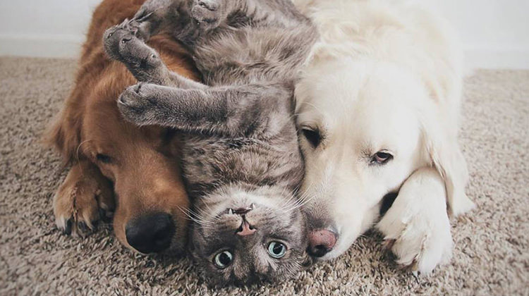 These Two Dogs And A Cat Are Best Friends And Love Doing Everything Together