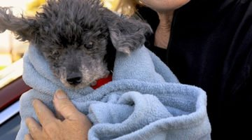 18-Year-Old Dog Abandoned At Vet Clinic Because Owners Said He Was Too 'Stupid'