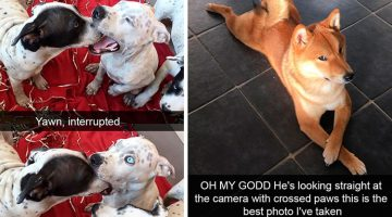 18 Dog Snapchats That Will Make You Laugh Out Loud (Part 2)