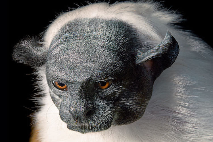 endangered-animals-pictures-tim-flach