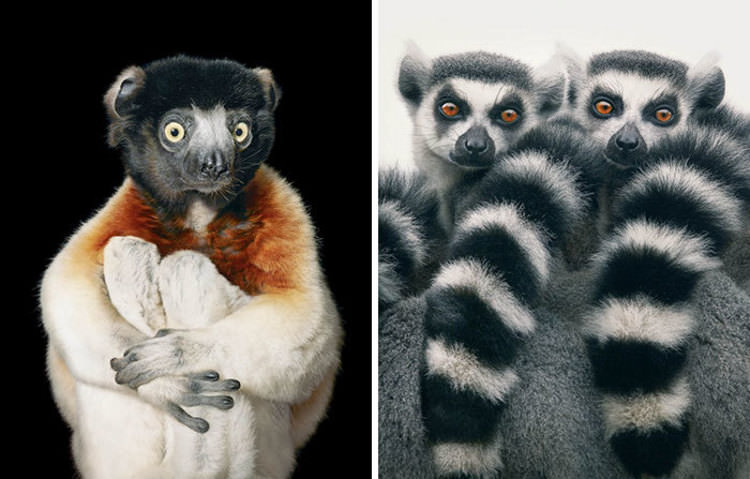 endangered-animals-photos-tim-flach