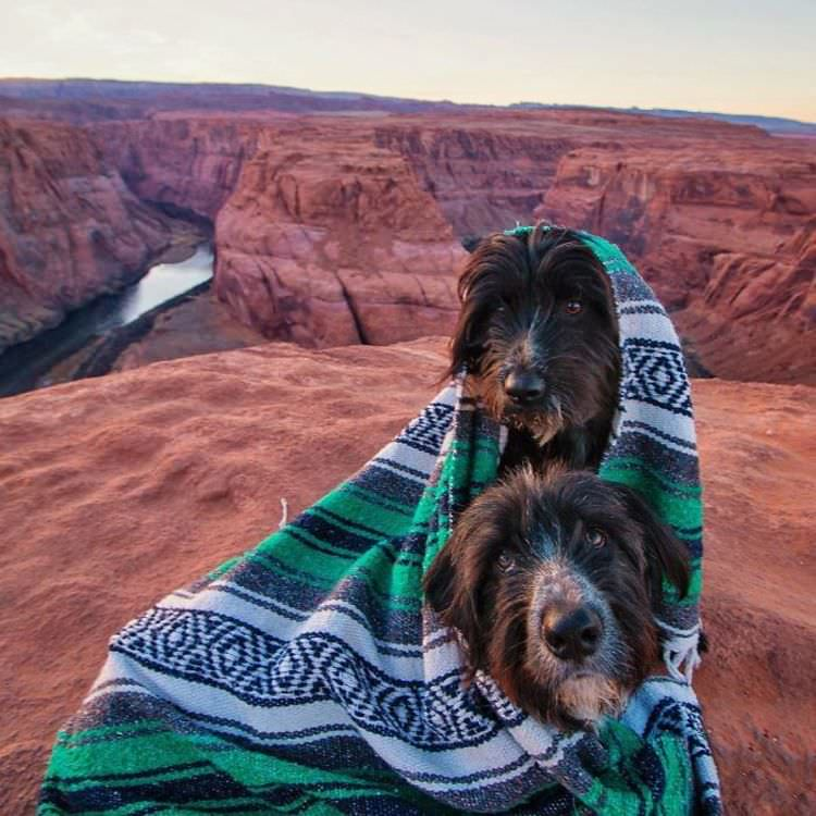 man-rescues-puppies-desert-epic-journey