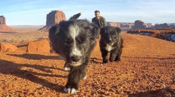 Man Rescues Two Puppies Left Behind In The Desert, Takes Them On Amazing 30,000-Mile Journey