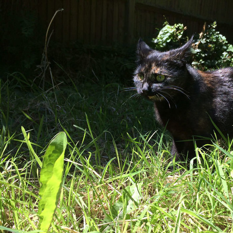 cat-brings-leaves-every-day