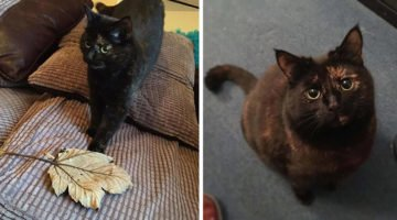 Cat Realizes Owner Doesn't Like Her Live Presents, Starts Bringing Big Leaves Every Day