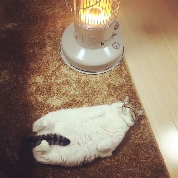 cat-loves-heater