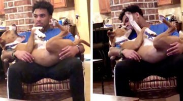Woman Introduces Dog To Boyfriend And Immediately Gets Left Out
