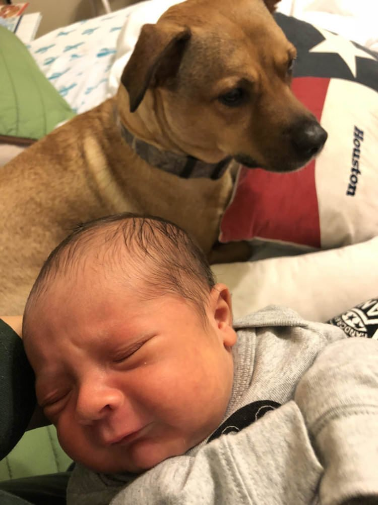 family-welcomes-newborn-baby-dog-changes