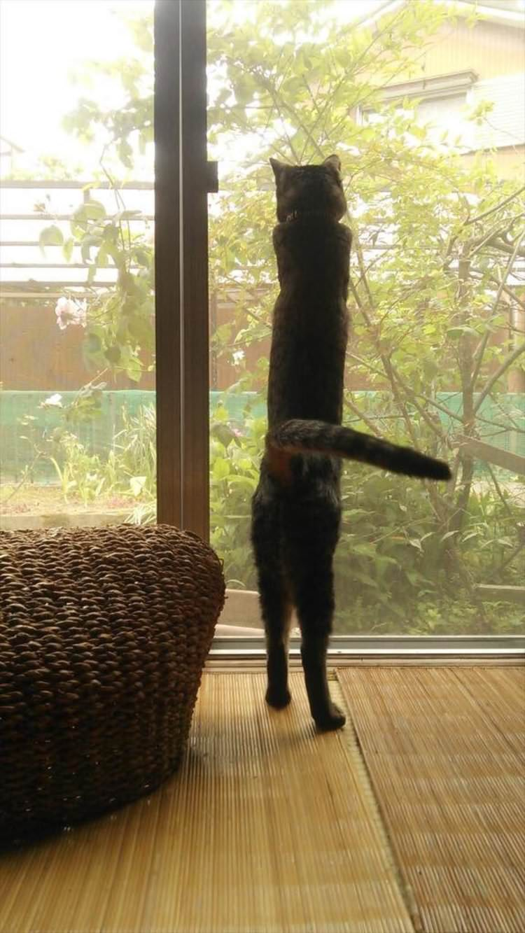funny-cats-stretching