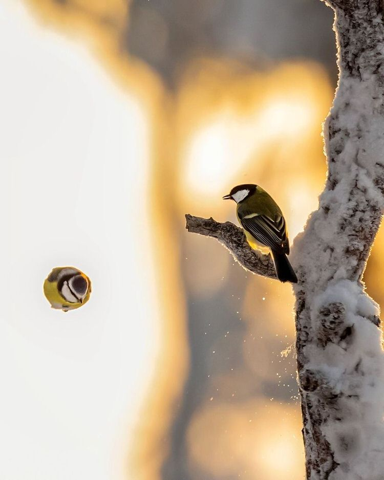 real-life-angry-birds-photos