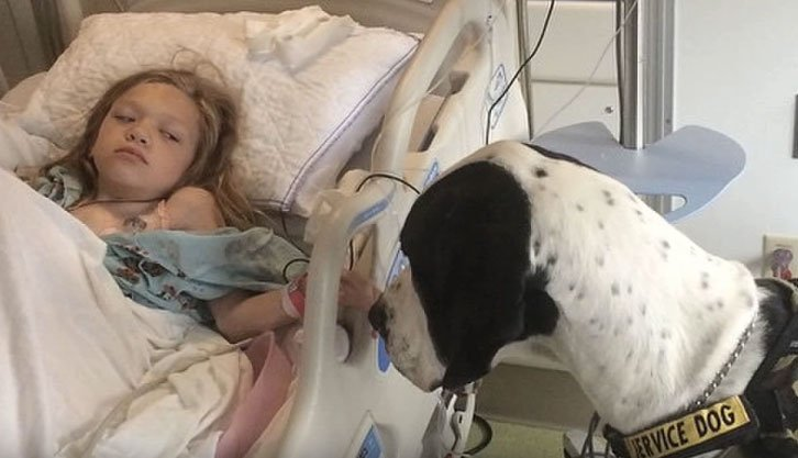 service-dog-helps-little-girl