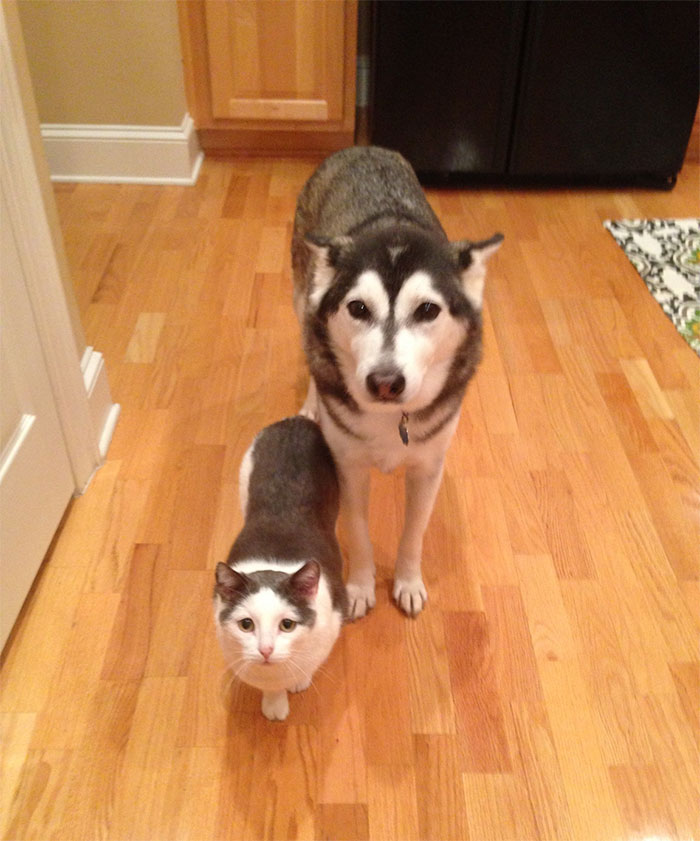 weird funny husky pictures