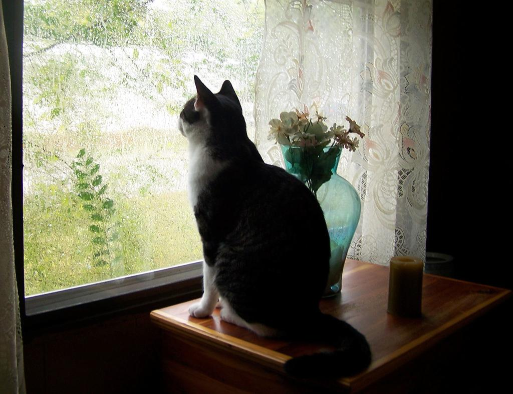 dog stares out the window in love with cat