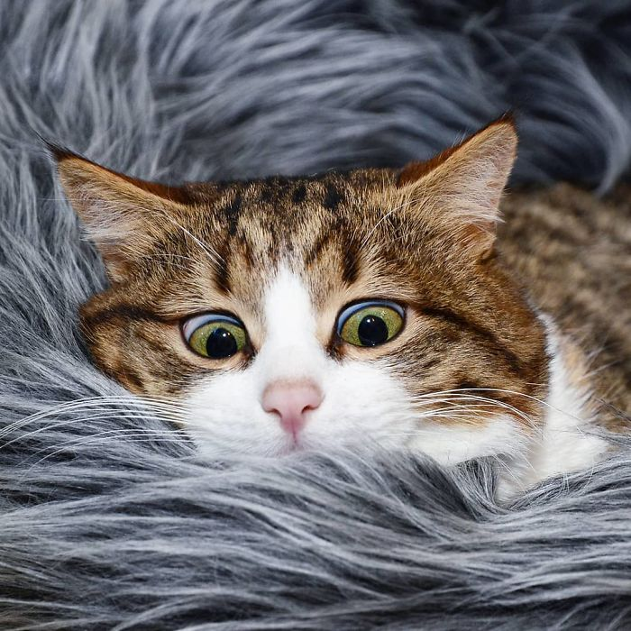 cat-disability-funny-facial-expressions