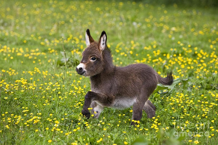 cute-donkeys-pictures