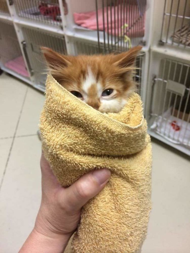 animal-shelter-volunteers-cute-pictures