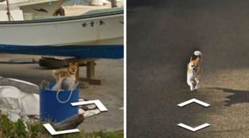 Tiny Dog Chases Google Car In Japan And The Internet Goes Crazy