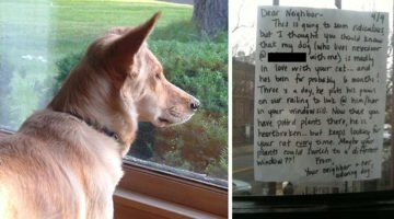 This Dog Would Always Stare Out The Window But When A Letter Arrives, It Gives Him A Chance For Love