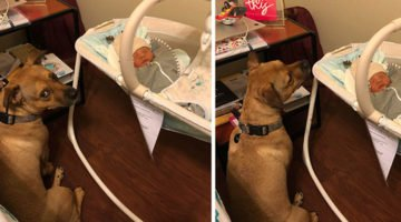 Family Welcomes A Newborn Baby, Then They Notice A Sudden Change In Their Dog