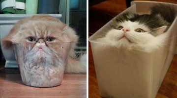 18 Funny Pictures That Show Cats Are Liquid