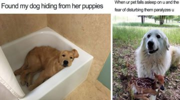 18 Happy Dog Memes That Will Make You Smile Till Your Face Hurts