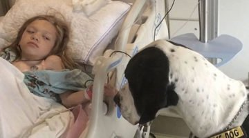 You Will Love This Story Of A Service Dog And How He Helped A Little Girl