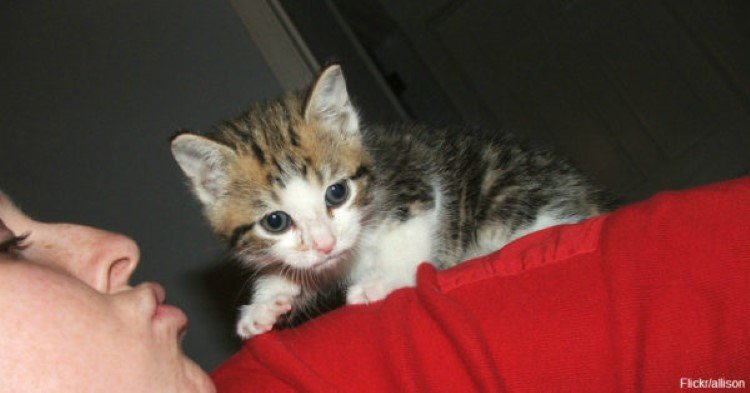 kittens-rescued-from-under-freezer-in-walmart