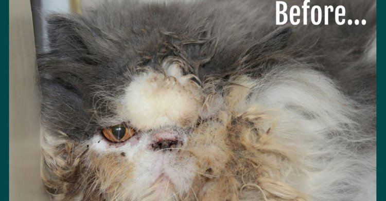 cat-rescued-from-hoarders-home-matted-hair
