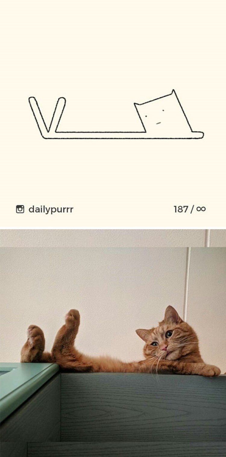 stupid-cat-drawings-funny