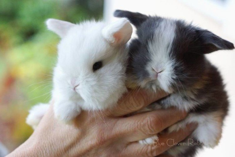 cutest-bunnies-pictures