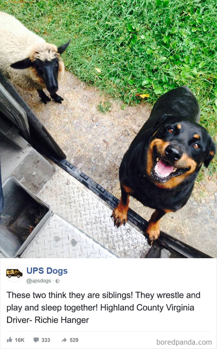 ups-drivers-animal-photos