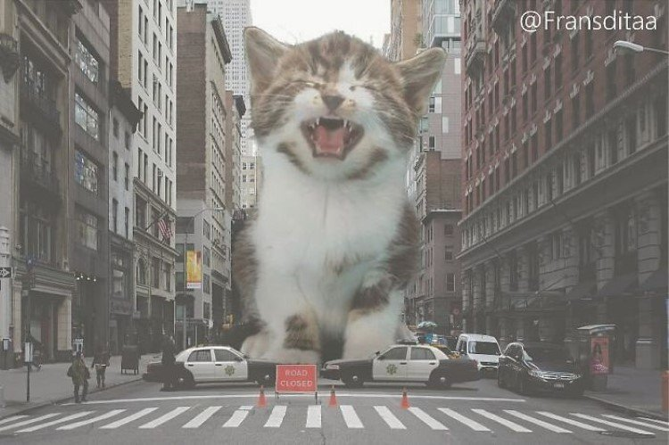 man-photoshops-giant-cats-into-everyday-scenes