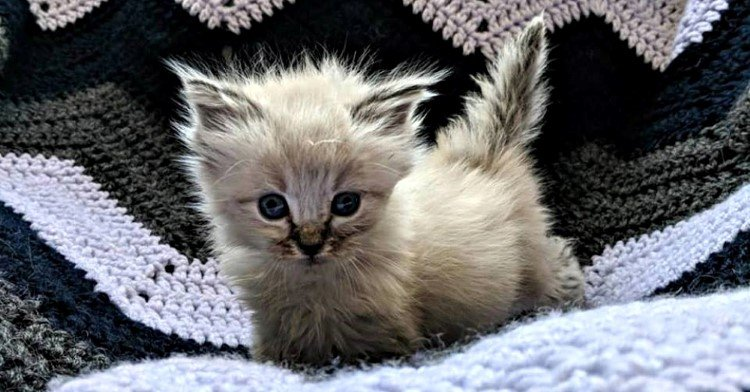 tiny-rescued-kitten-purrs-ultra-loud