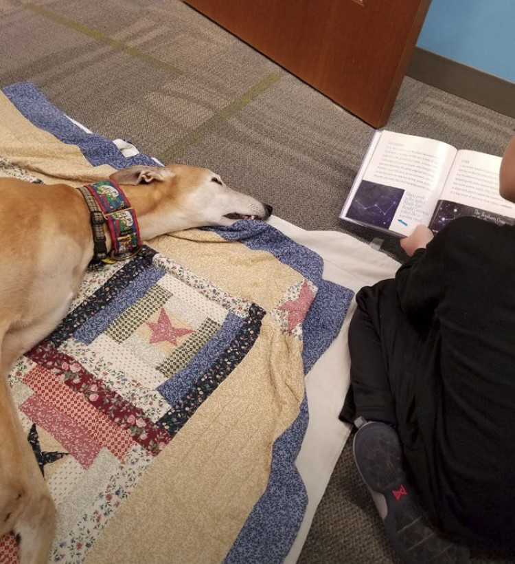 retired-greyhound-sting-paws-to-read