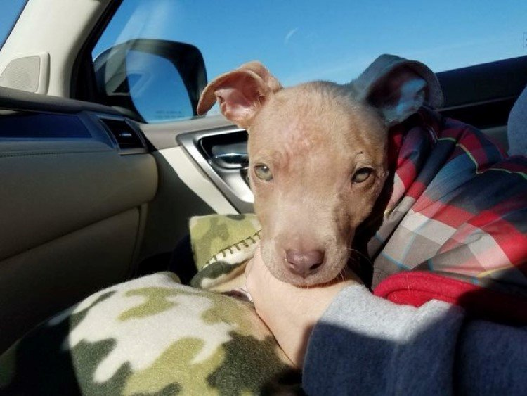 little-puppy-found-injured-now-have-loving-home