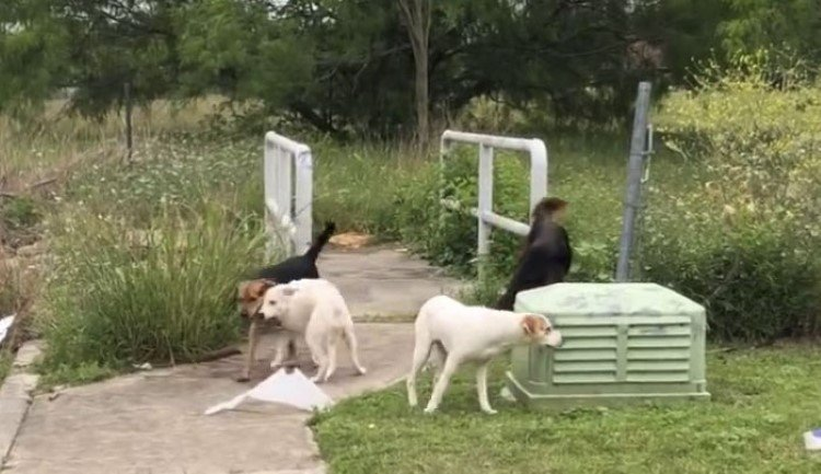 woman-caught-on-video-dumping-her-dogs