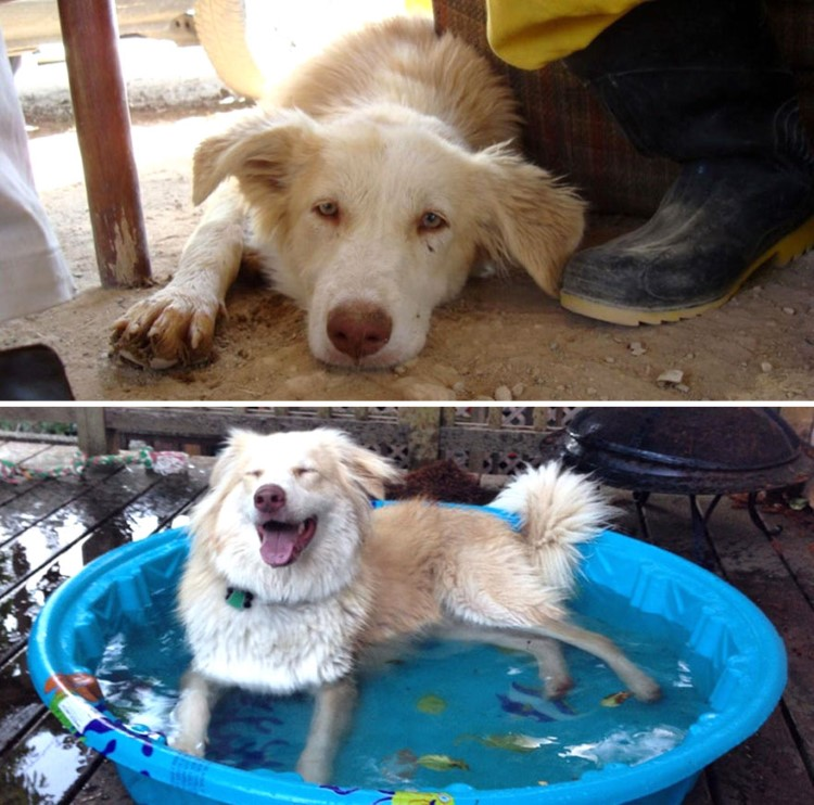 before-and-after-dog-adoption-pictures-will-melt-your-heart