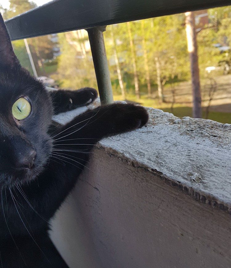 cat-goes-out-on-the-balcony-for-the-first-time