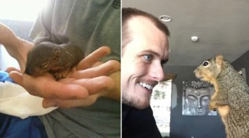 A Baby Squirrel Fell From A Tree But He Had A Guardian Angel And They Are Now Inseparable