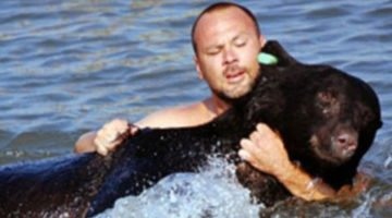 He Saw A Bear Struggling In The Water So He Dived Right In On A Rescue Mission